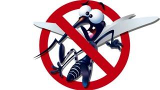 Plase insecte cu reglaj gratuit!